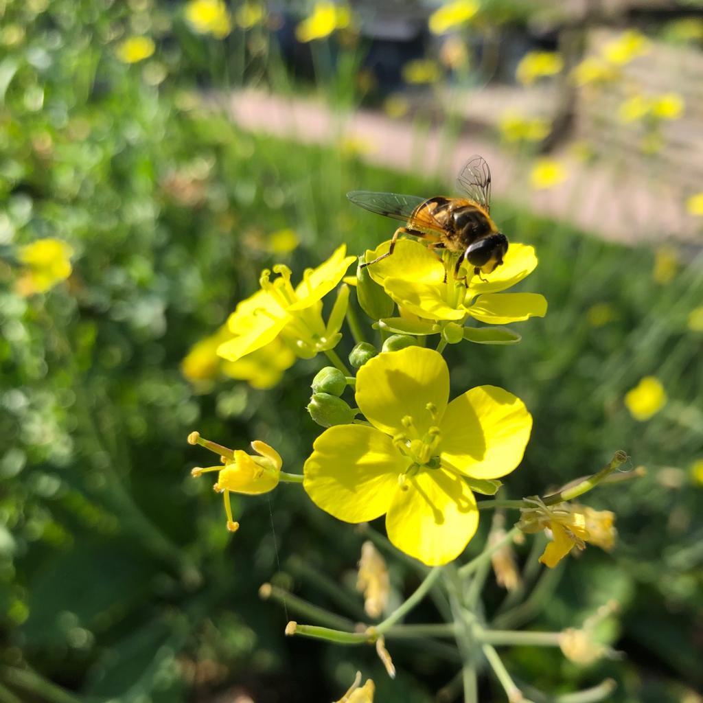 Groeikaart; bijen en vlinder mix